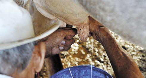 industria láctea, Nicaragua, producción de leche, golpe de leche