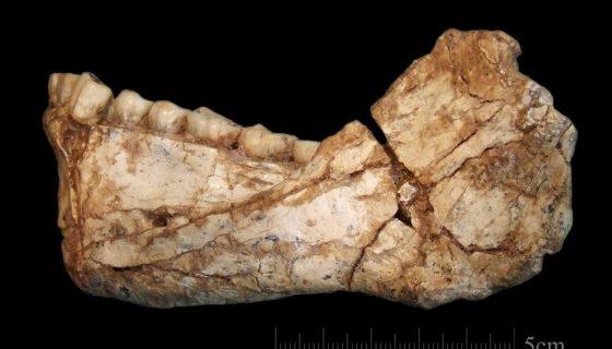 homo sapiens más antiguo del mundo, homo sapiens