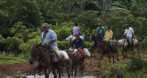 ganaderos nicaragüenses, Nicaragua, leche, exceso de leche