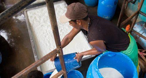 sector láceto, Nicaragua, exceso de leche, ganaderos