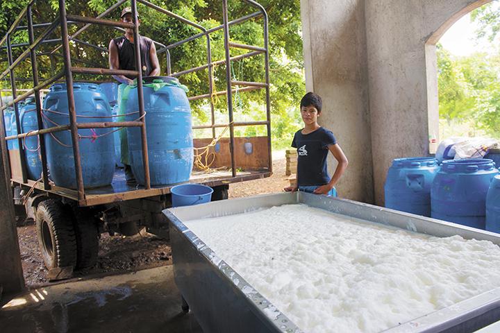 ganaderos, sector lácteo