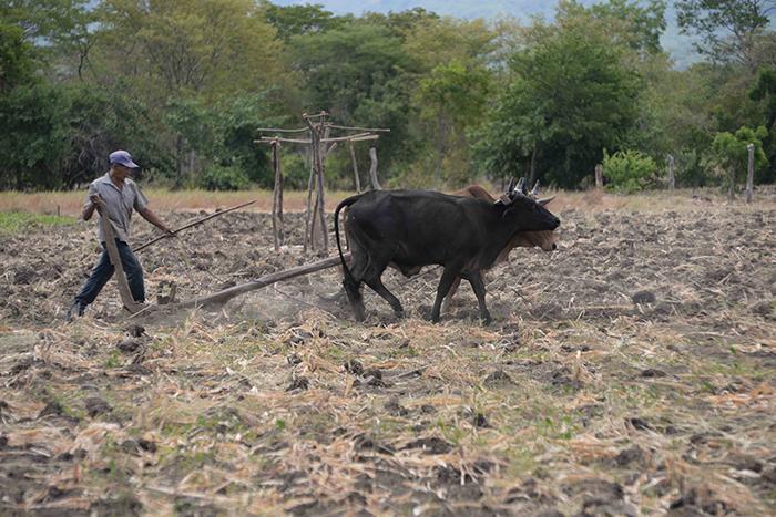 Nicaragua, producción agrícola,