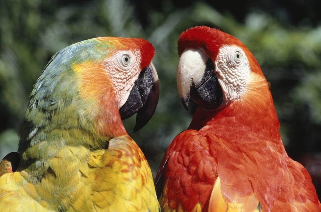 lapas, especies, especies en extinción, veda, Nicaragua