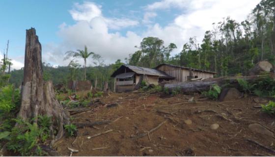 áreas protegidas, deforestación