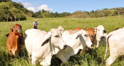 lácteos, productores de leche