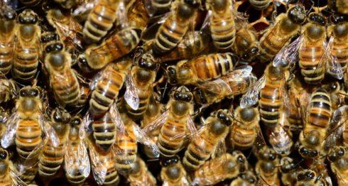 abejas, miel producción de miel, Nicaragua