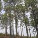 Se ha perdido un millón de hectáreas de bosques en cinco años