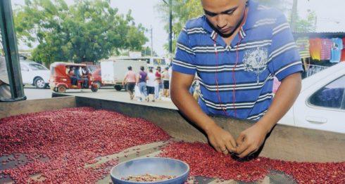 frijol nicaragüense