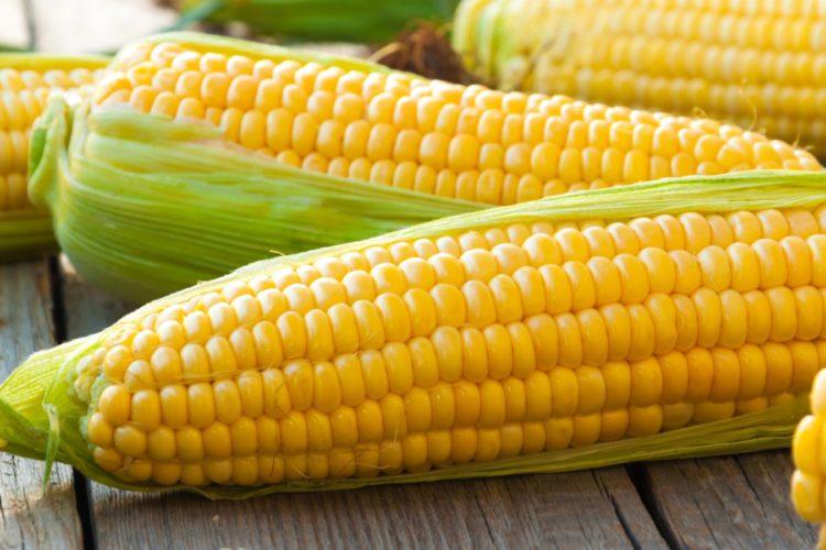 El Maíz, Tradición Y Nutrición