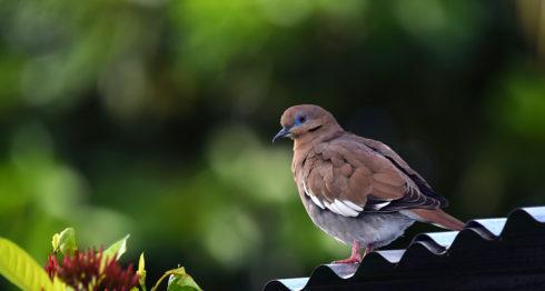ave, foto del lector