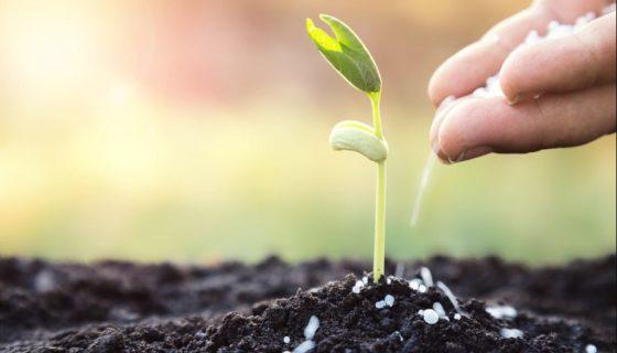 Comprobar la nutrición del suelo mejora la productividad de los cultivos. FOTO: LA PRENSA/ THINSTOCK