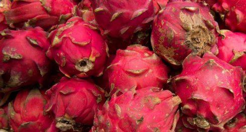 pitahaya, Nicaragua, pitaya