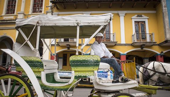 Cocheros de Granada, caballos