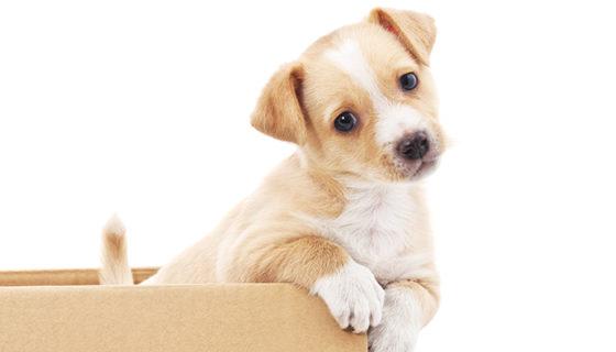 Sea preguntado por qué los perros no pueden reconorse ante el espejo. El olfato tiene mucho que ver.
