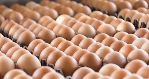 comercialización del huevo