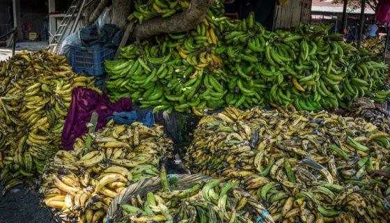 precio del plátano, Rivas, Ometepe