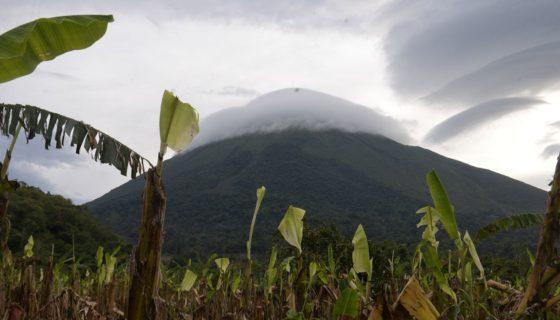 Nicaragua, Ometepe, plátanos, plátanos, cosechas de plátano