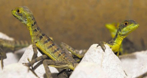Nicaragua, animales exóticos