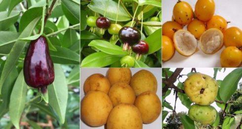 frutas, Brasil