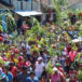 Fotogalería | Promesantes celebran a San Diego de Alcalá, en Altagracia