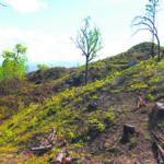 Régimen orteguista recorta 146 millones de córdobas al Ministerio del Ambiente y Recursos Naturales