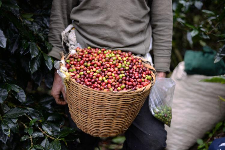 crisis cafetalera, café, productores