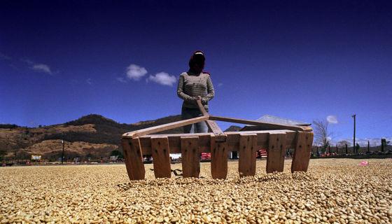 cafetaleros de Nicaragua