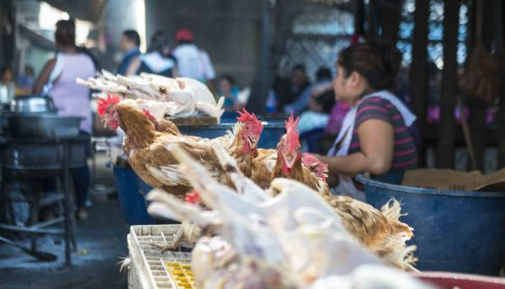 fin de año, gallina, cena, mercado Oriental
