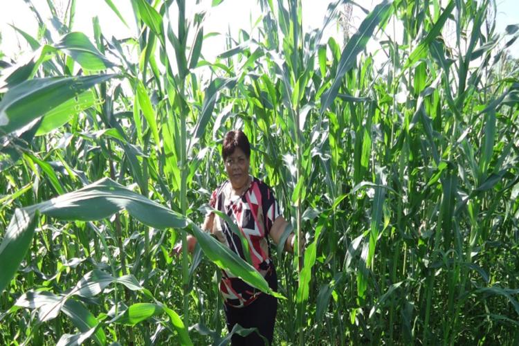Cuarta de 12 razones por las que Nicaragua debe decir no a los cultivos transgénicos