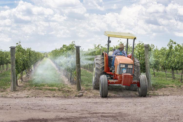 Quinta razón por la que Nicaragua debe decir no a los cultivos transgénicos