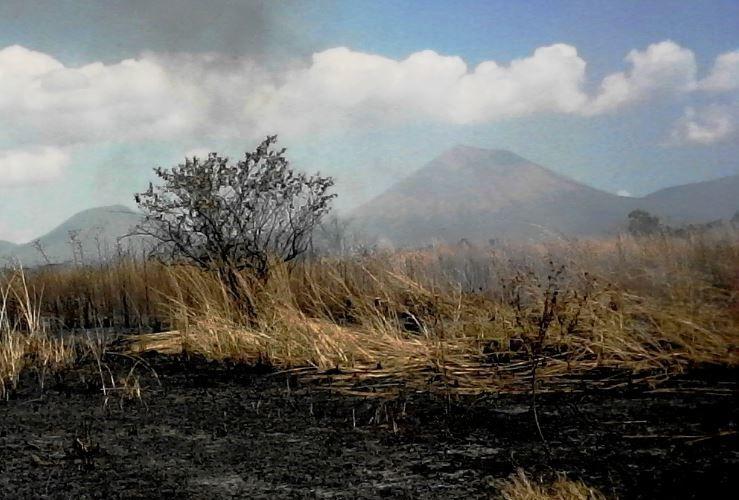 Depredadores ambientales, incendios