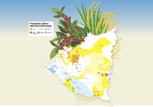 Conatradec, producción agrícola, Nicaragua,
