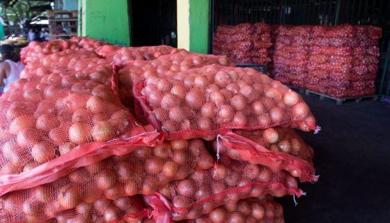 cebollas, productores