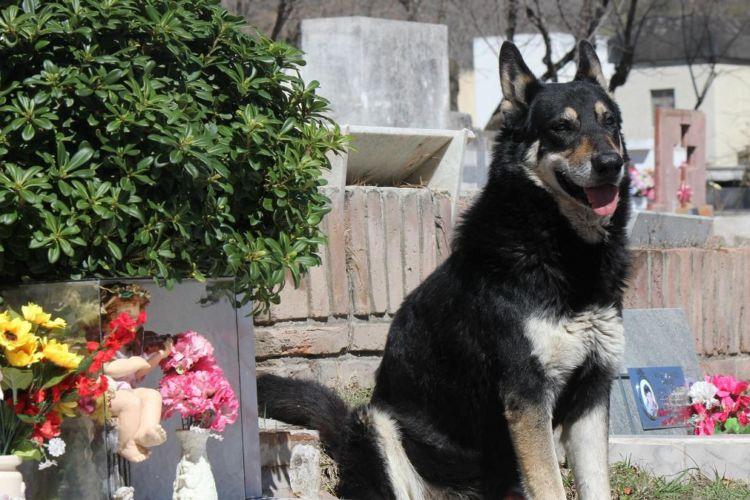 Argentina, perro
