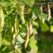 Semillas criollas garantizan producción estable, sostenible y diversa