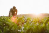 Campesinos eliminan uso de agroquímicos al cultivar con enfoque agroecológico