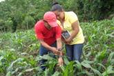 Bancos de semillas, estrategia de seguridad alimentaria