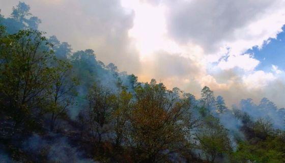 Incendio forestal, Nueva Segovia, Dipilto, Bosques