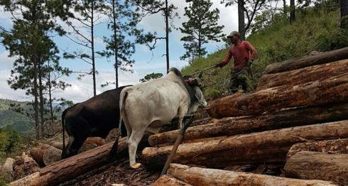 La deforestación es el principal problema ambiental en Nicaragua, dicen los expertos. LA PRENSA/ ARCHIVO