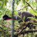 La Selva, el laboratorio natural más grande del mundo
