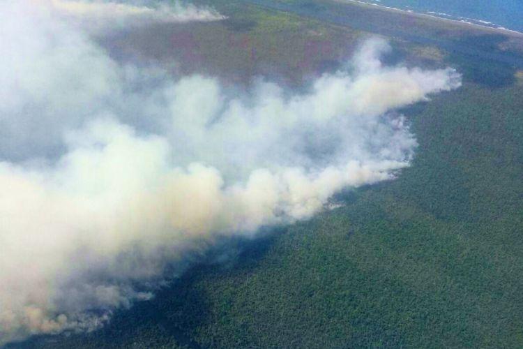 El incendio en la Reserva Biológica Indio Maíz inició el martes por la tarde. LA PRENSA/ Cortesía Fundación del Río
