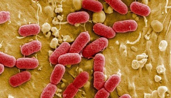 bacterias, cuerpo humano