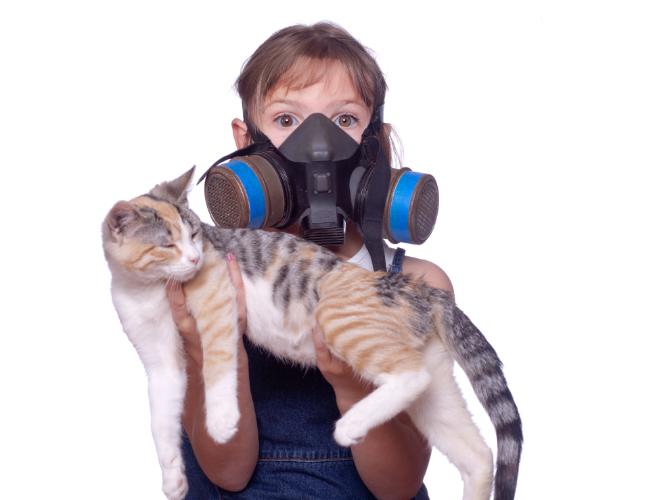 Gatito, alergia
