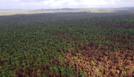 reserva indio maíz, Nicaragua, incendios forestales