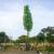 """Nicaragüenses botan cinco """"árboles de la vida"""" en un solo día"""