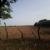 Productores de maíz pierden cosecha por sequía en Chinandega