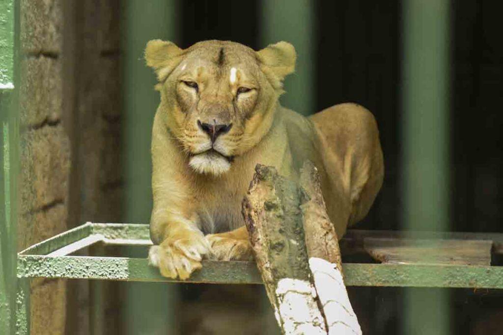 zoologico nacional