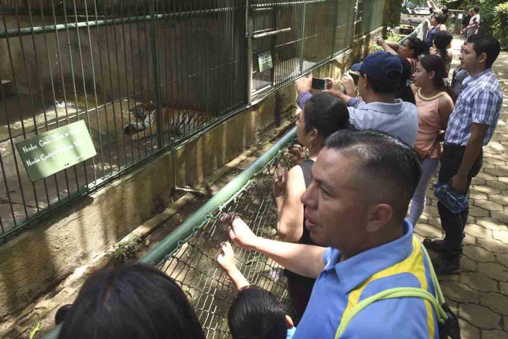 animales, zoologico nacional