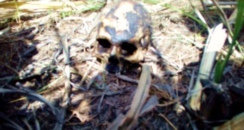 Los restos del joven estaban siendo devorados por aves de rapiña y el cráneo fue hallado a varios metros del lugar donde encontraron el cuerpo en El Viejo, Chinandega. LA PRENSA/ SAÚL MARTÍNEZ