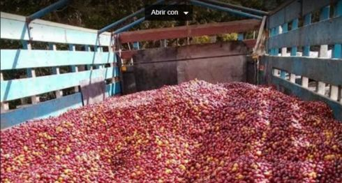 Producción de café, Nicaragua